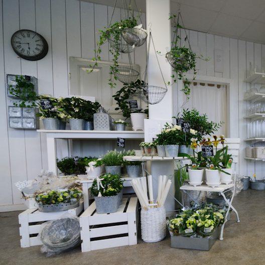 Krukväxter och arrangemang i vitt och grönt