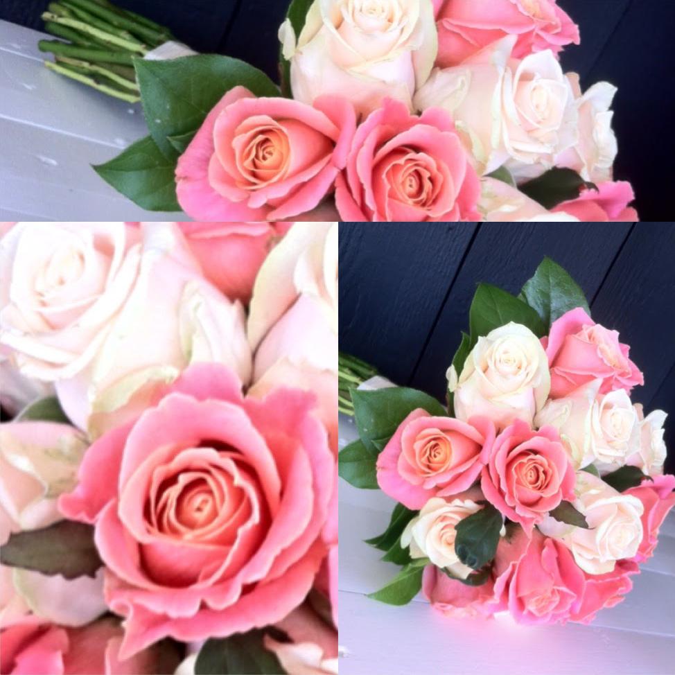 Vita och rosa rosor